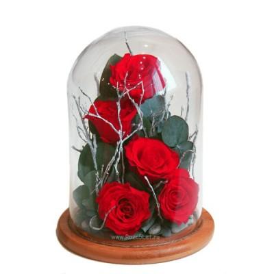 Розы, Эвкалипт хрустальный