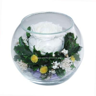 натуральный пион в стекле, вакуум*