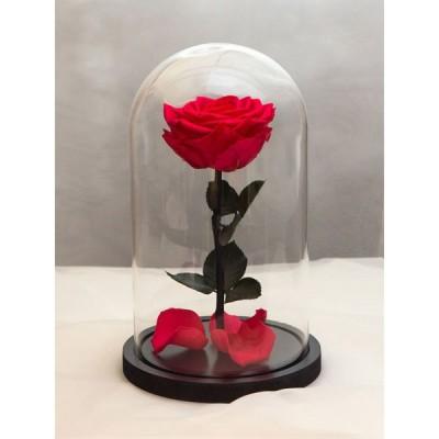 99_36 Роза в колбе (любой цвет на выбор)