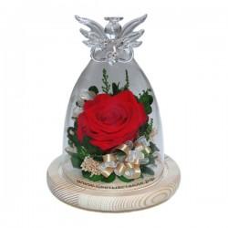 99_55 Роза (премиум) в колбе, ангел