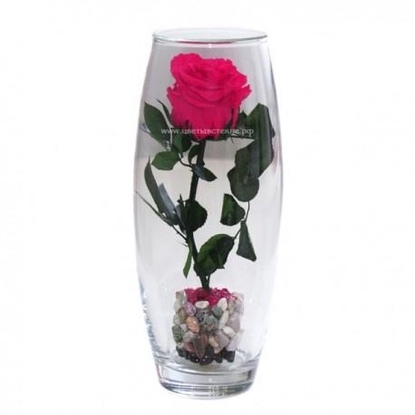 Роза в колбе на стебле