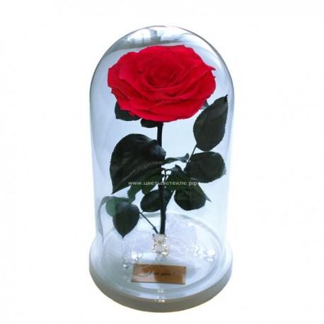 99_38 Премиум Роза в колбе