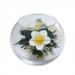 99_11 Розы франжипани в стекле, вакуум*