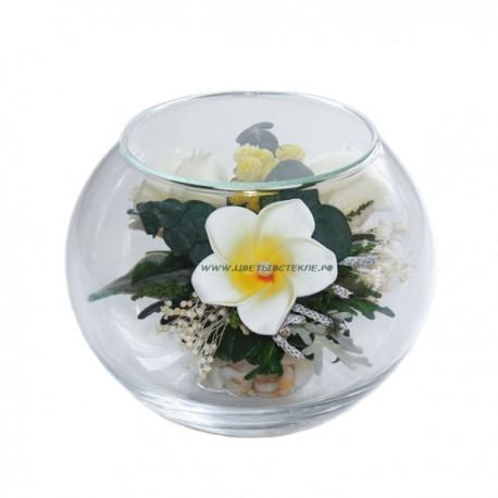 Розы Плюмерия в стекле, вакуум*