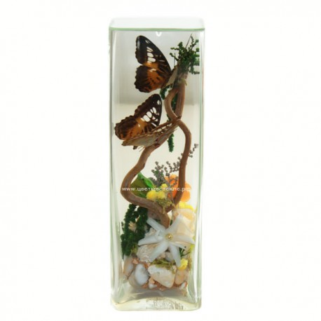 99_73 с бабочками