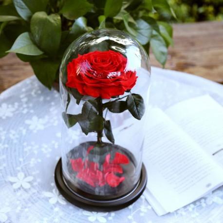 Роза в колбе (любой цвет на выбор)