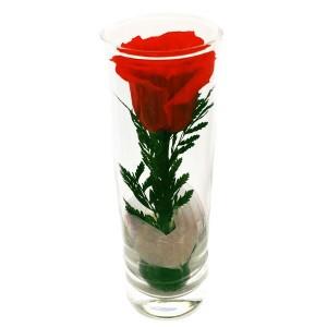 Роза в колбе Рубин